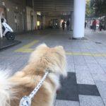 犬の保育園で武蔵小杉